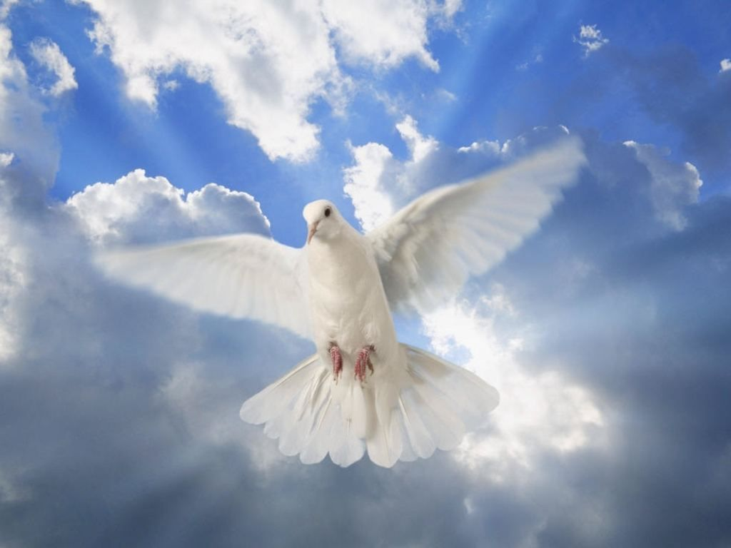 Peace-Dove-from-Heaven  Heaven