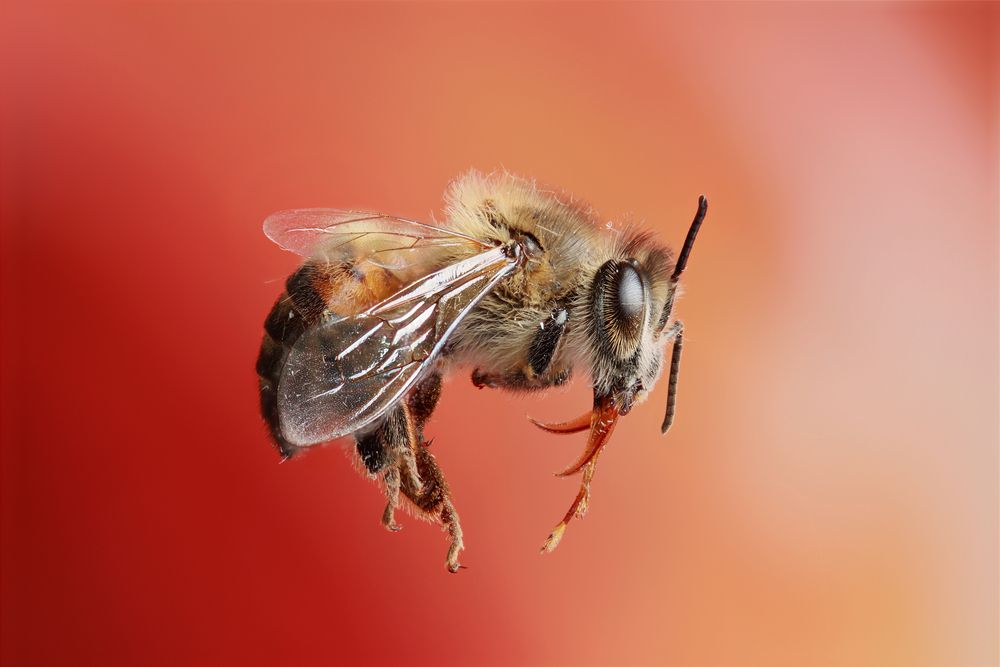 7. Bees Sting Acid; Wasps Sting Bases