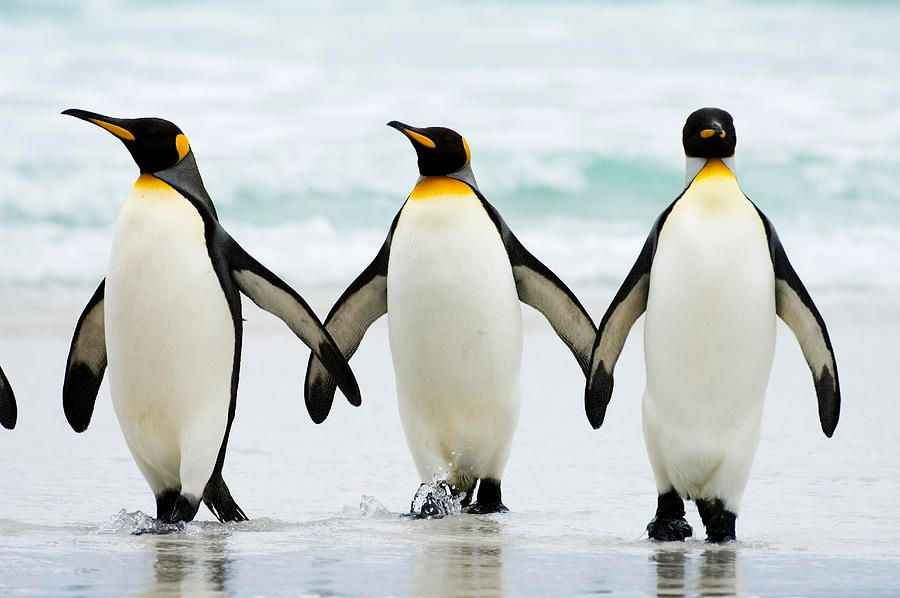 2. Penguins