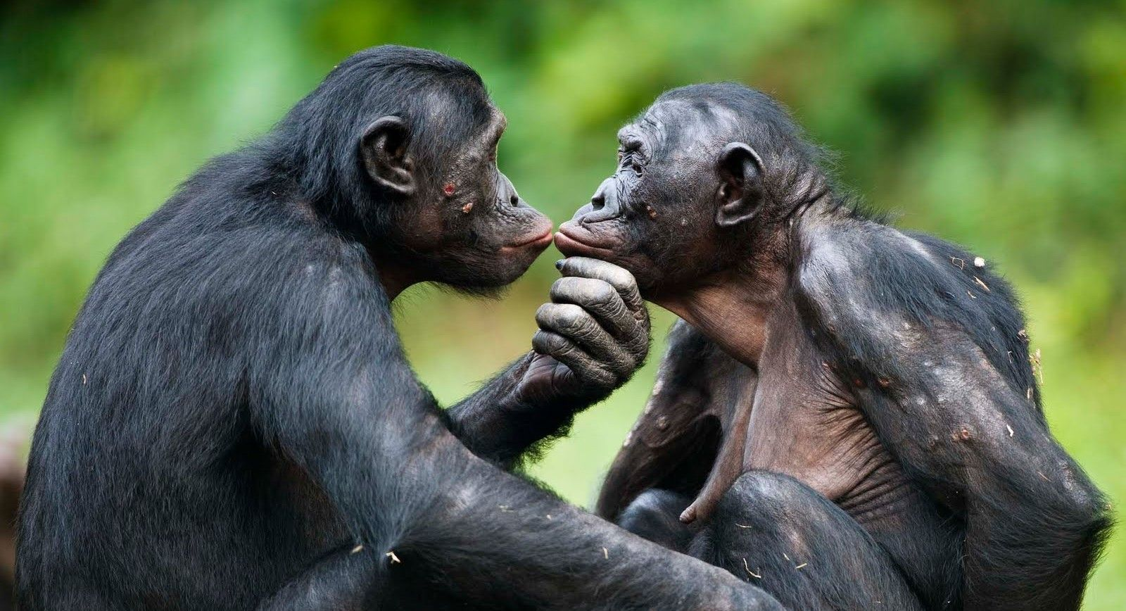 10 Of The Most Promiscuous Animals In The World