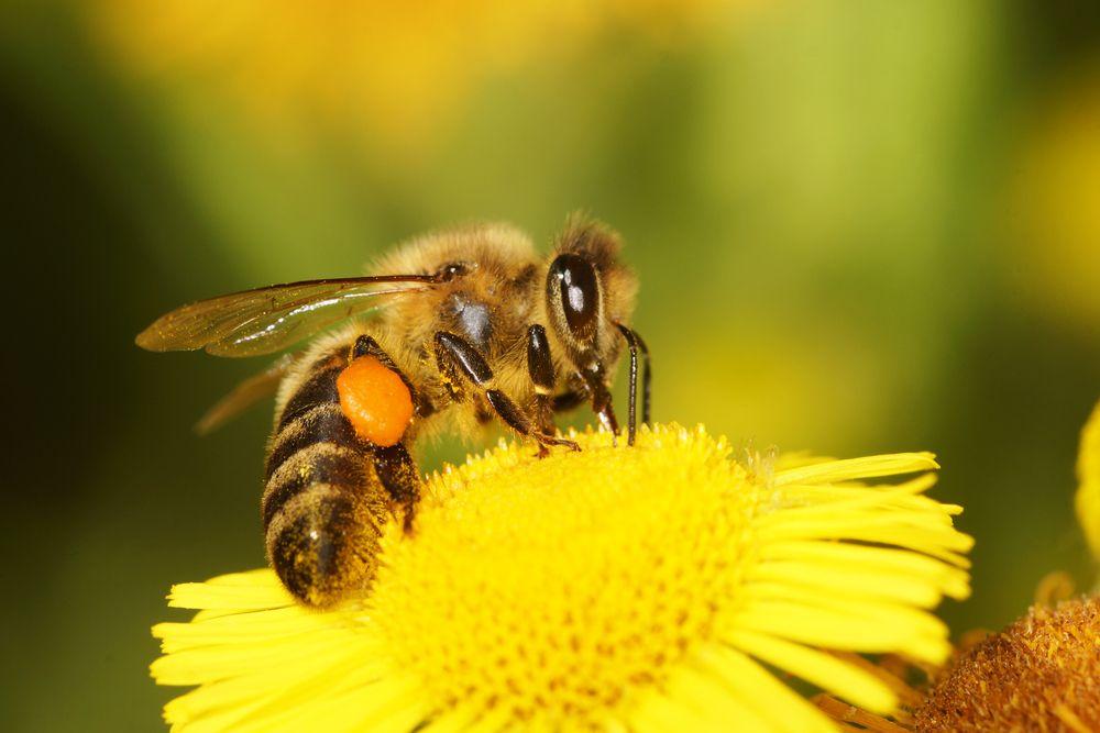 2. Bee Sting Addiction